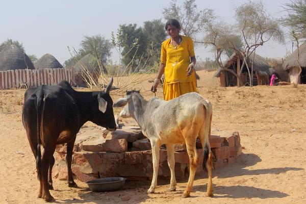 Rajasthan-15